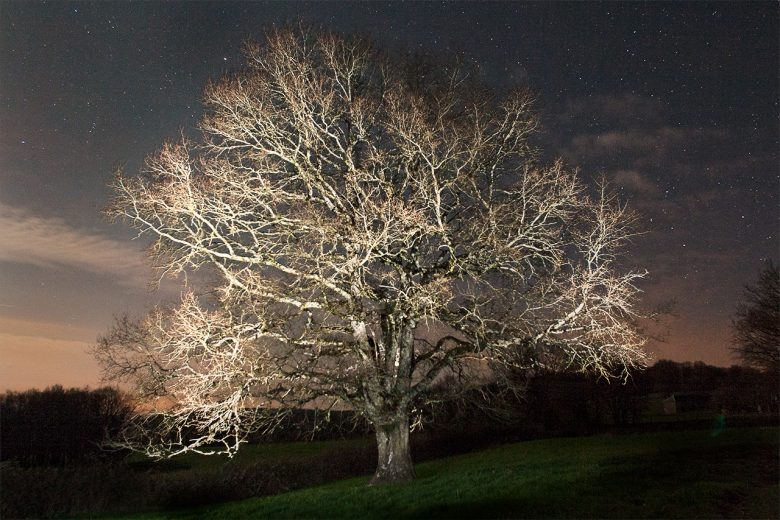 Un arbre de nuit, lightpainting.
