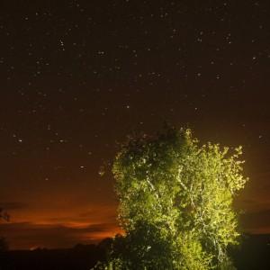 Un arbre de nuit