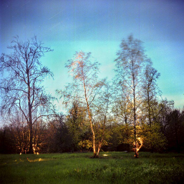 3 arbres de nuit en pose longue et lightpainting.