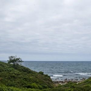 Un arbre égaré en bord de mer