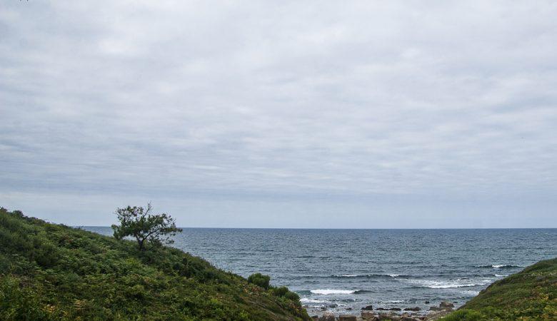 Un arbre égaré au bord de la mer.