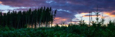 Un coin de forêt au couché du soleil