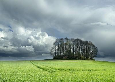Le bosquet de La Motte, ancien tumulus par un jour d'orage.