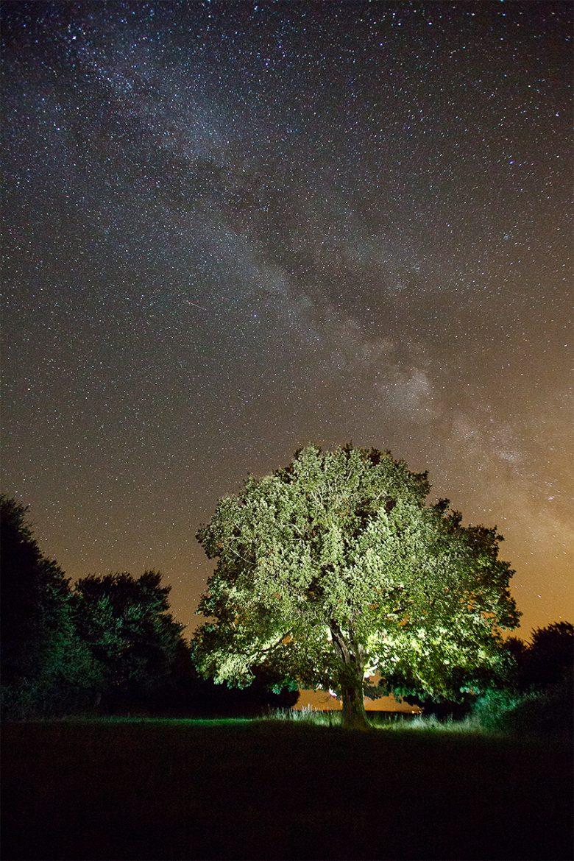 Arbre de nuit open-flash et pause longue