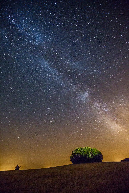 Bosquet d'arbres de nuit, open-flash et pause longue